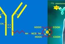Điều trị đích ung thư đầu cổ bằng kháng thể đơn dòng gắn đồng vị phóng xạ - công nghệ sản xuất tại Viện Nghiên cứu hạt nhân